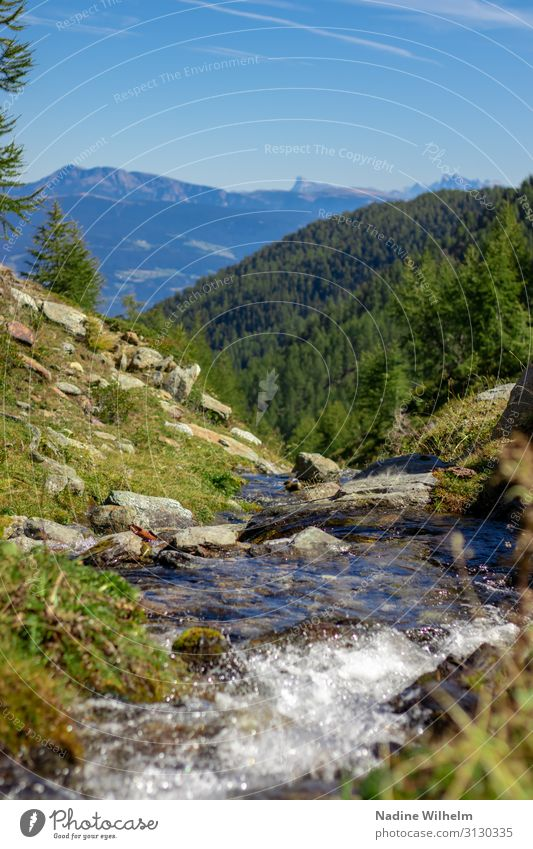 Mountain stream with mountain view Nature Landscape Plant Earth Water Sky Horizon Summer Beautiful weather Grass Alps Warmth Blue Brown Green White Peace