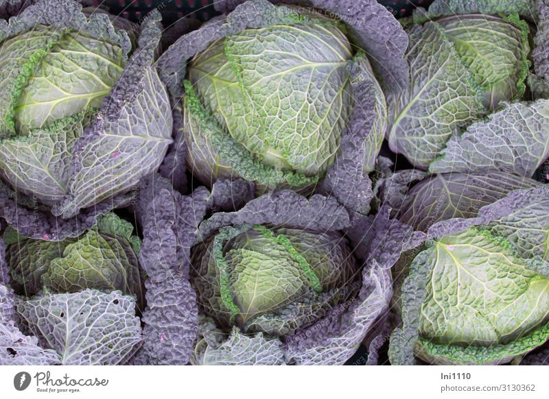 cabbage harvest Food Vegetable Savoy cabbage Nutrition Lunch Dinner Organic produce Vegetarian diet Nature Plant Agricultural crop Blue Yellow Green Violet Burl