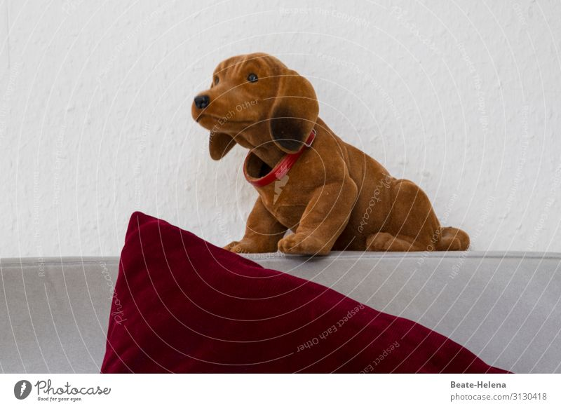 Dog Red Joy Funny Fashion Brown Moody Living or residing Flat (apartment) Decoration Retro Cute Observe Friendliness Kitsch Pet