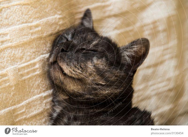 Cat Beautiful Relaxation Calm Joy Emotions Happy Contentment Dream Smiling Esthetic Happiness Joie de vivre (Vitality) To enjoy Warm-heartedness Friendliness