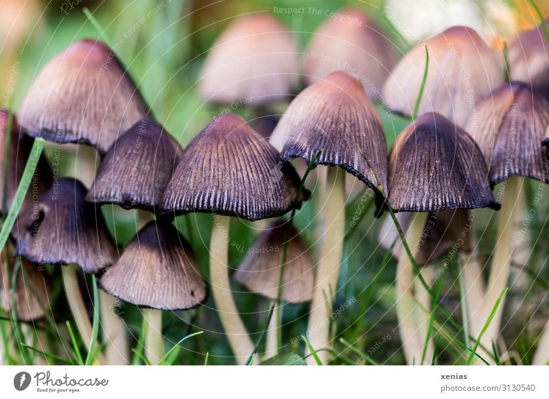 Mushrooms in the meadow Grass Environment Summer Autumn Garden Park Nature Meadow Forest Growth Small Brown Green Black Inedible Sprout Detail