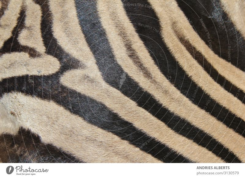 Zebra Stripes - Iconic Patterns in Nature Vacation & Travel Tourism Adventure Sightseeing Safari Animal Wild animal zebra skin zebra pattern zebra background 1