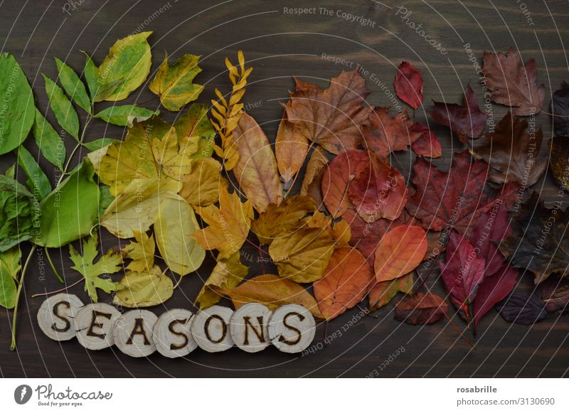 The changing seasons Thanksgiving Environment Nature Autumn Leaf To fall Illuminate Brown Yellow Green Orange Red Variable Transience Change Exchange