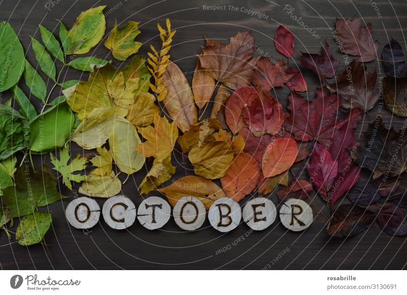 Calendar page October in english Environment Nature Autumn Leaf Wood To fall Illuminate Brown Yellow Green Orange Red Hope Death Variable Transience Change