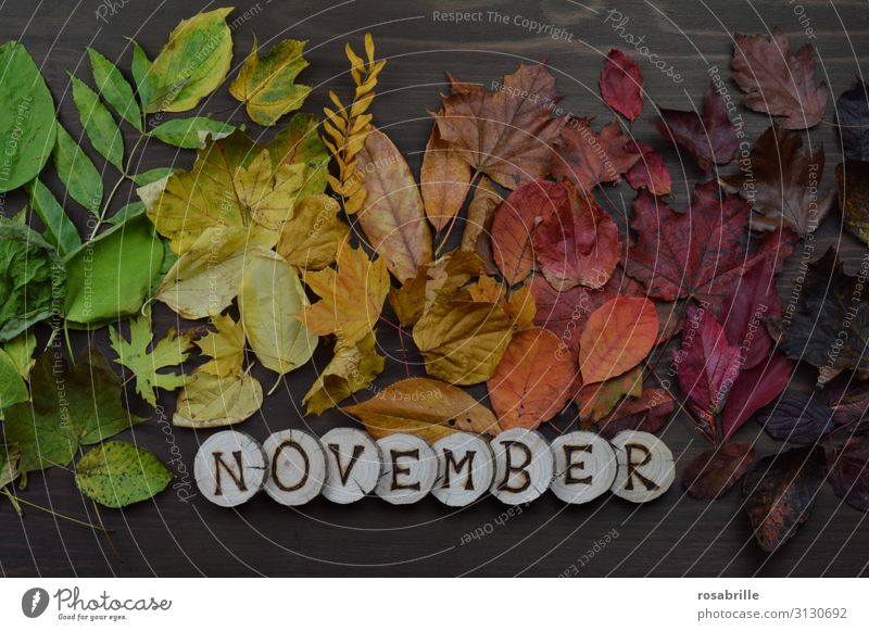 Calendar page November Environment Nature Autumn Leaf Wood To fall Illuminate Brown Yellow Green Orange Red Death Loneliness Variable Transience Change Exchange