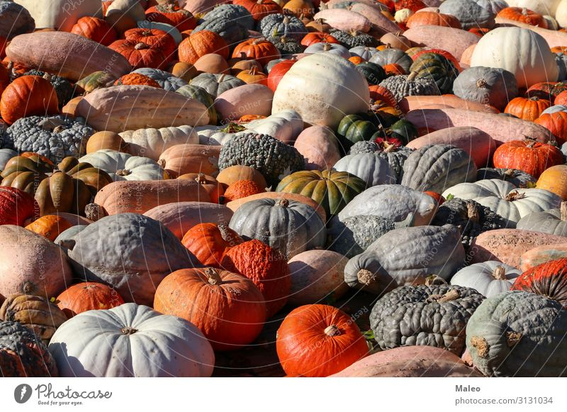 Fresh healthy organic pumpkins at an agricultural market in autumn Autumn Bazaar Organic produce Organic farming Multicoloured Cooking Farm Farmer Food