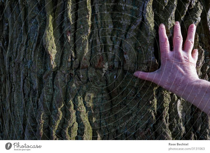 fingertip sensitivity - contact Hand Plant Tree Tree bark Oak tree oak bark Touch Brown Protection forest bath Contact Old Rough Freckles Colour photo