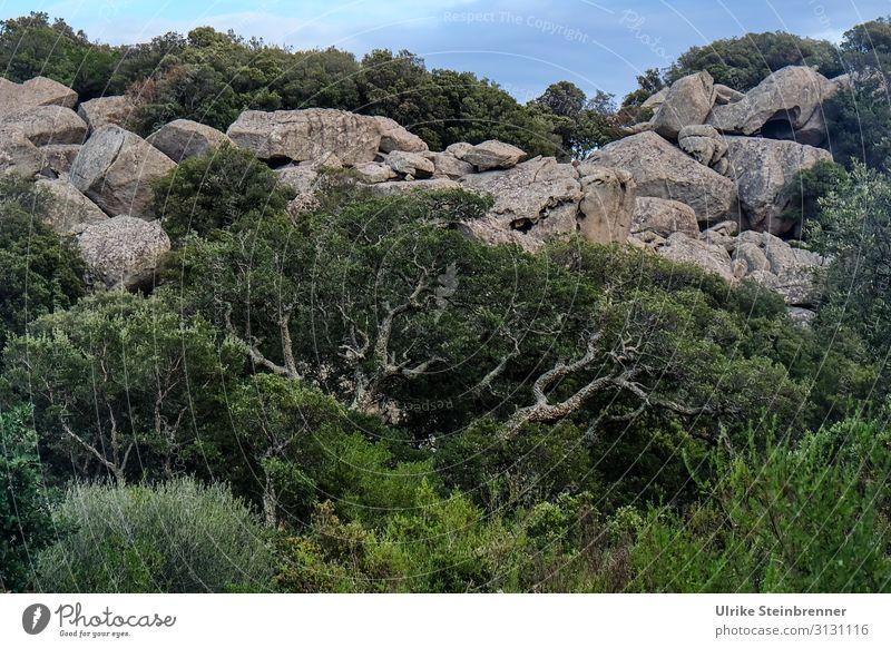Rock with old cork oak in Sardinia Aggius Stone stone Geology Tempio Pausania Landscape granite landscape Valle della Luna gallura Natural monument High plain