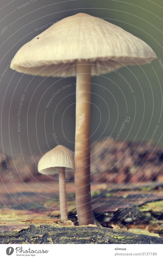 Don't get so fat! Nature Plant Autumn Mushroom Mushroom cap Beatle haircut Forest Growth Thin Together Small Willpower Brave Romance Unwavering Envy Arrogant