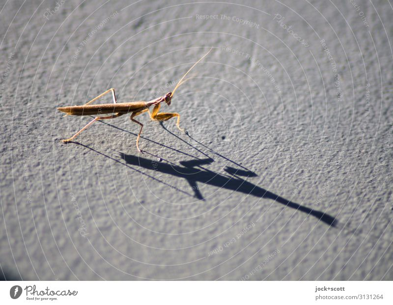 Insect with shadow Animal Life Warmth Small Moody Free Wild animal Sit Authentic Perspective Dangerous Wait Uniqueness Cute Serene Near