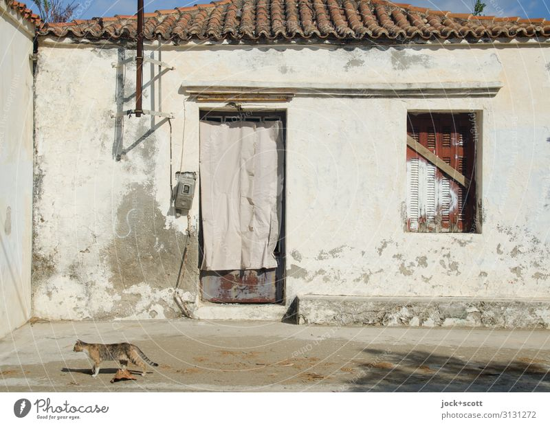 House & Cat Architecture lost places Greece House (Residential Structure) Facade Window door 1 Roofing tile Walking Authentic Moody Romance Serene Idyll
