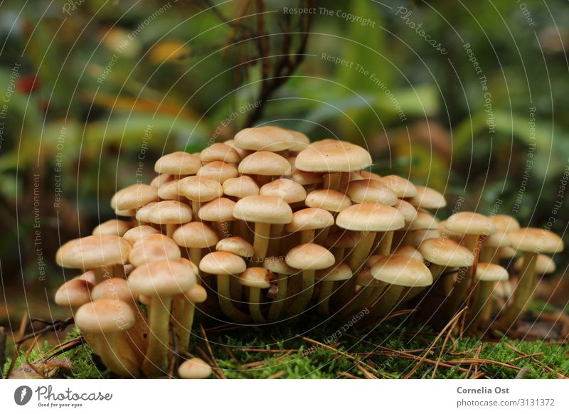 Together we are strong Nature Plant Earth Autumn Mushroom Brown Colour photo Exterior shot Detail Deserted Day Central perspective