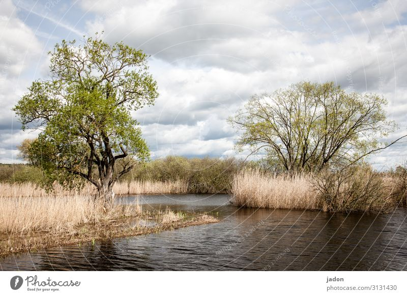 more water. Environment Nature Landscape Plant Water Clouds Spring Climate change Tree River Threat Wet Change Common Reed Flood Colour photo Exterior shot