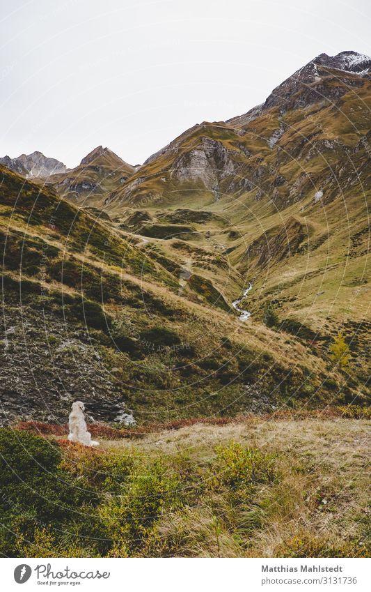 Dog in the mountains Vacation & Travel Tourism Adventure Mountain Hiking Environment Nature Landscape Autumn Snowcapped peak Dolomites Animal Pet