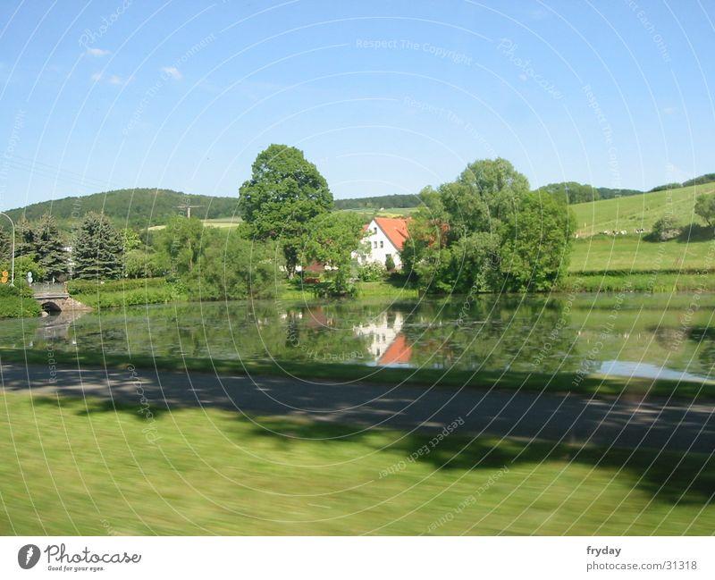Water Tree Movement Lake Speed