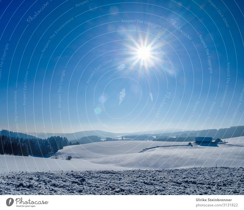 Winter Vacation & Travel Tourism Trip Snow Winter vacation Mountain Hiking Environment Nature Landscape Air Sky Beautiful weather Tree Field Forest Hill