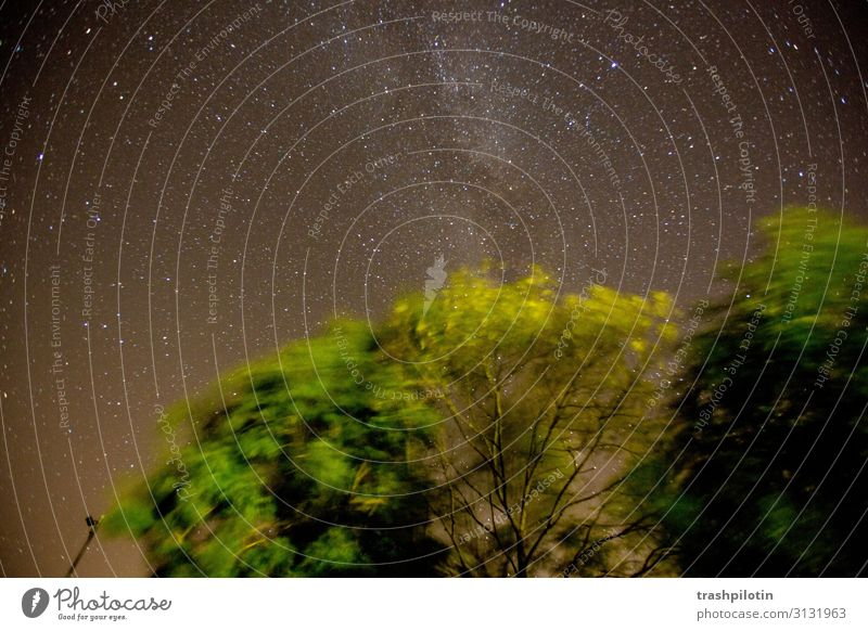 stars Environment Nature Landscape Elements Air Earth Sky Night sky Stars Tree Forest Speed Hope Milky way Long exposure Colour photo Exterior shot