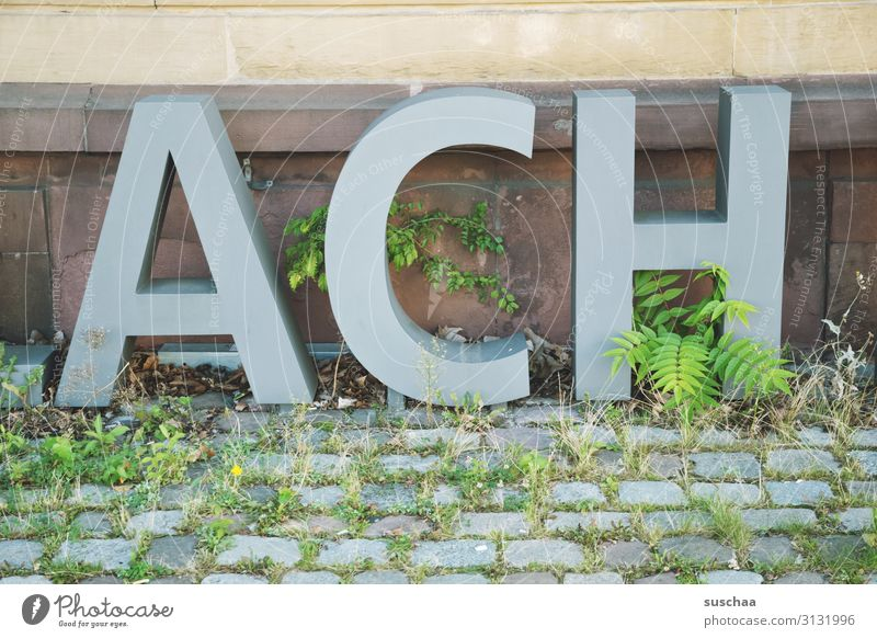 oh (soooooo) Letters (alphabet) Capital letter Word small capitals Large Exclamation Wall (building) Exterior shot Cobblestones Plant Foliage plant Overgrown