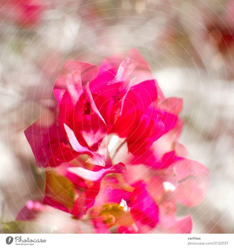 Flower Adults Feasts & Celebrations Birthday Jubilee 18