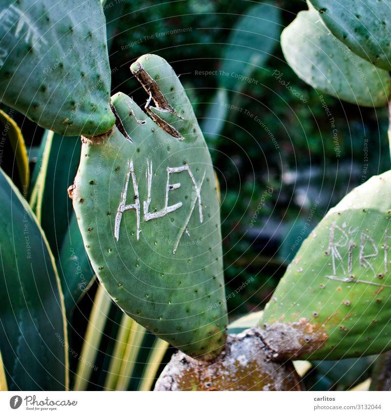 ALEX one Cactus Alexanderplatz Carve Letters (alphabet) Characters Memory