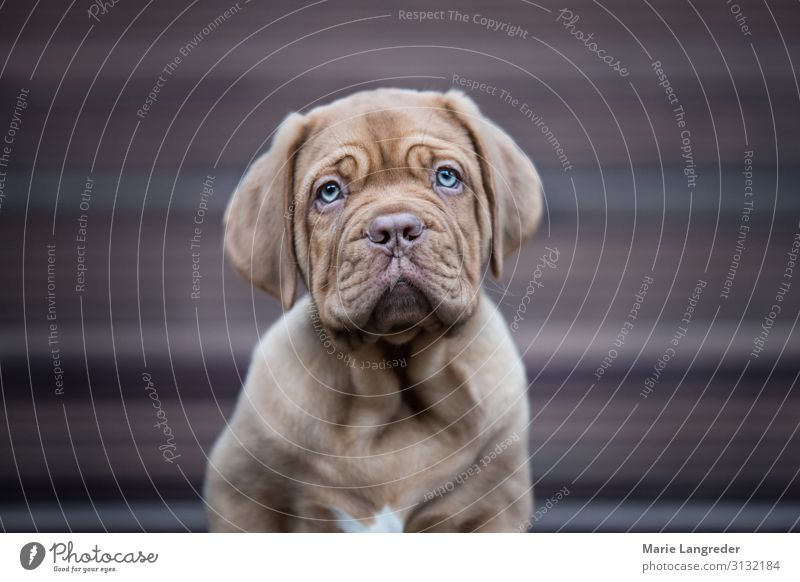 puppy Animal Pet Dog 1 Baby animal Cute Puppy Colour photo Subdued colour Exterior shot Copy Space left Copy Space right Day Shallow depth of field