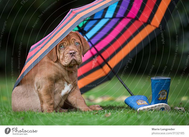 Dog Animal Autumn Spring Rain Joie de vivre (Vitality) Wind Wet Cute Climate Pet Umbrella Bad weather Rubber boots Love of animals Puppy