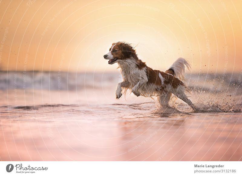 freedom Summer Summer vacation Sun Beach Ocean Nature Landscape Water North Sea Animal Pet Dog 1 Swimming & Bathing Walking Happy Yellow Gold Violet Pink Joy