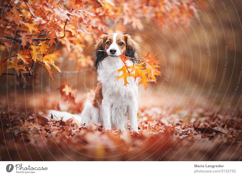 Dog in autumn dream Nature Autumn Beautiful weather Tree Forest Animal Pet 1 Multicoloured Yellow Gold Orange Red Love of animals Leaf Colour photo
