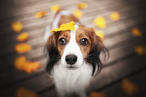 autumnlove Nature Autumn Beautiful weather Leaf Animal Pet Dog 1 Warm-heartedness Colour photo Exterior shot Copy Space left Copy Space right Day