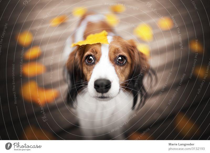 Nature Dog Animal Leaf Autumn Beautiful weather Warm-heartedness Pet