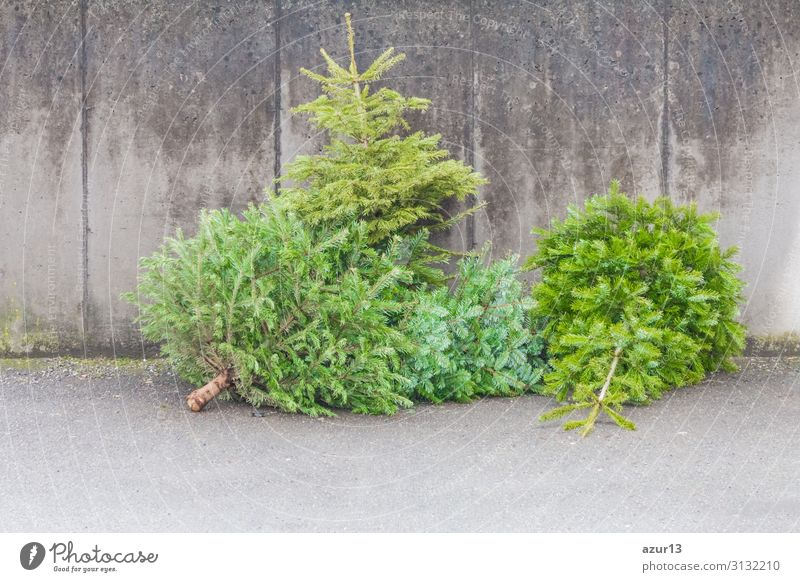 Traditional green christmas trees firs on street at xmas season Winter Christmas & Advent New Year's Eve Environment Tree Lie Wait Old Trashy Gloomy Green Sale