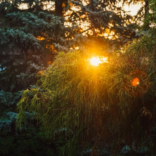 green tree at sunset and warm light Autumn Park Background picture Beautiful Bright Multicoloured Copy Space bottom Copy Space left Forest Garden Landscape