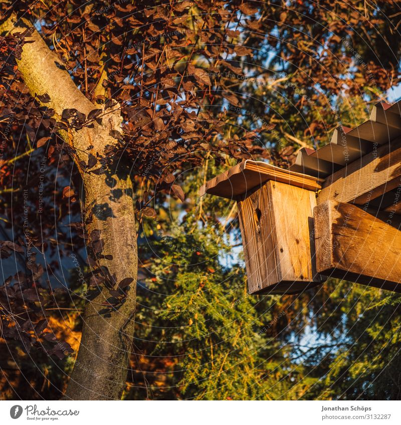 Birdhouse at shed in the garden Autumn Multicoloured Garden Gardening Hut Exterior shot Evening sun Day Warmth Animal Environmental protection Wood Garden plot
