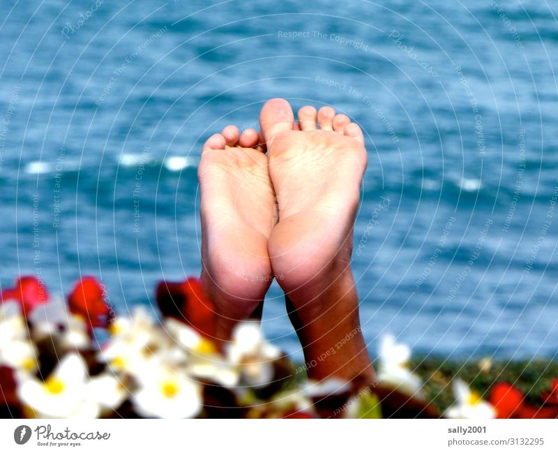 barefoot on summer vacation... feet Sole of the foot Toes Water Ocean flowers Flower hedge Barefoot bathe Summer Relaxation holidays blow up upstairs