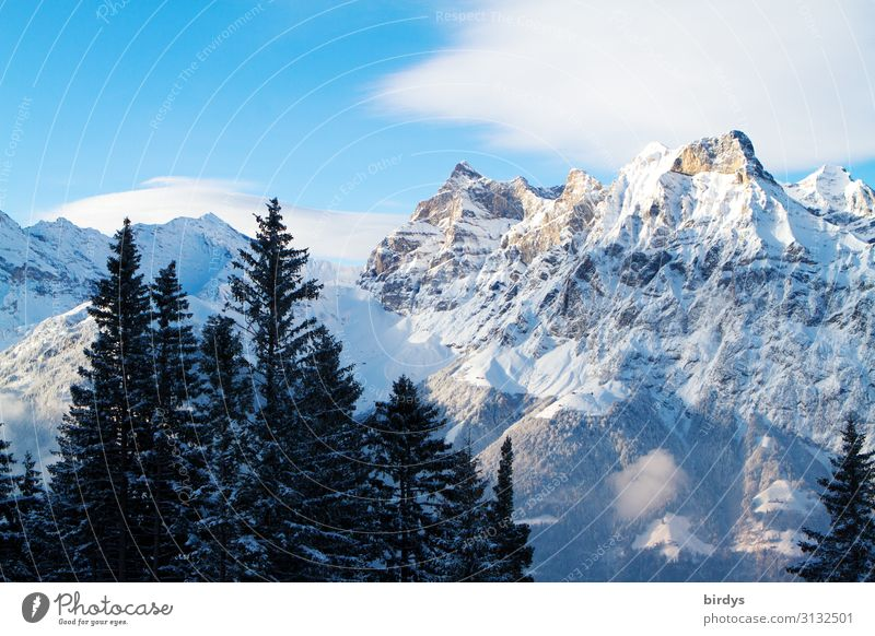 alpine world Nature Landscape Sky Clouds Winter Climate change Beautiful weather Tree Fir tree Alps Mountain Peak Snowcapped peak Authentic Tall Cold Natural