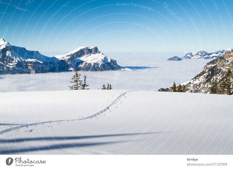 Tracks in the snow Vacation & Travel Tourism Freedom Winter Snow Winter vacation Mountain Winter sports Nature Landscape Cloudless sky Horizon Climate change