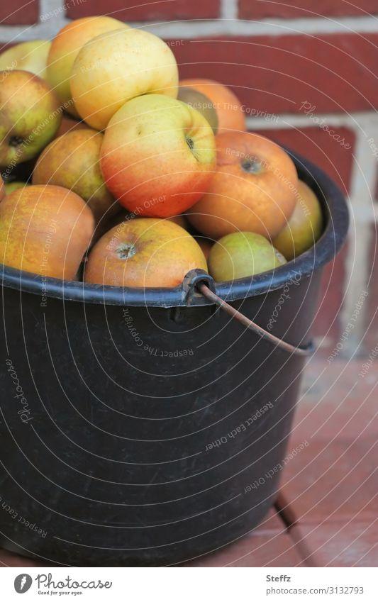 apple harvest Apple apples Garden fruit Food Fruit Nutrition Organic produce Vegetarian diet Vegan diet Environment Nature Autumn Fruit garden Simple Fresh