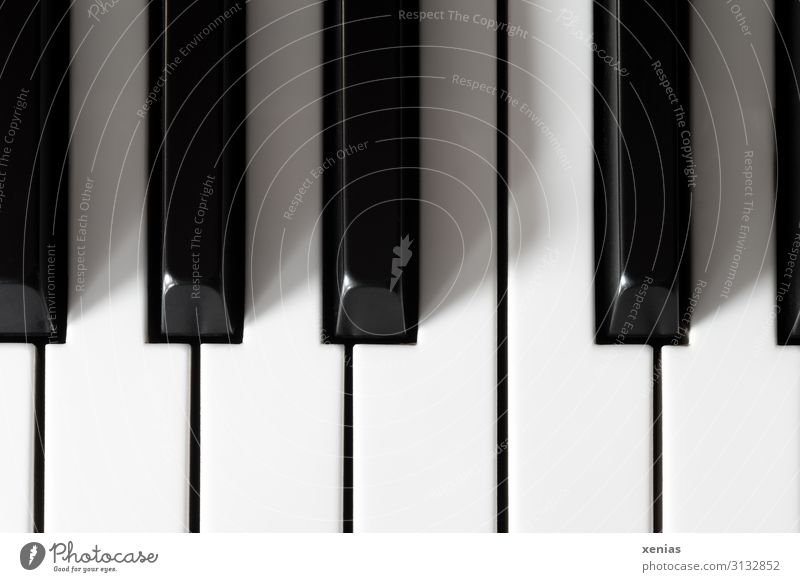 Fingertip sensitivity / Piano keys Keyboard Listening Playing Black Music White Passion Senses Intuition Studio shot Detail Deserted Make music