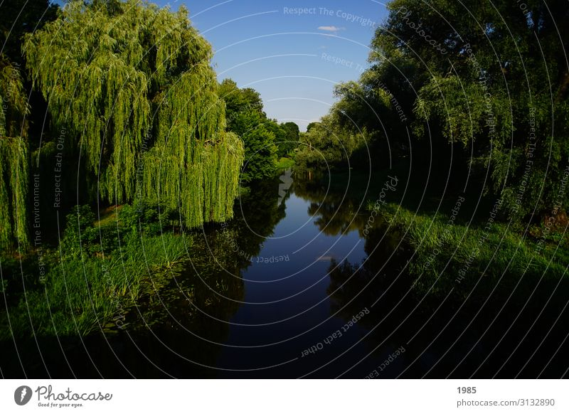 flux mirroring Nature Landscape Water Cloudless sky Summer Beautiful weather Tree River bank Exceptional Blue Green Serene Calm Life Hope Infinity Reflection