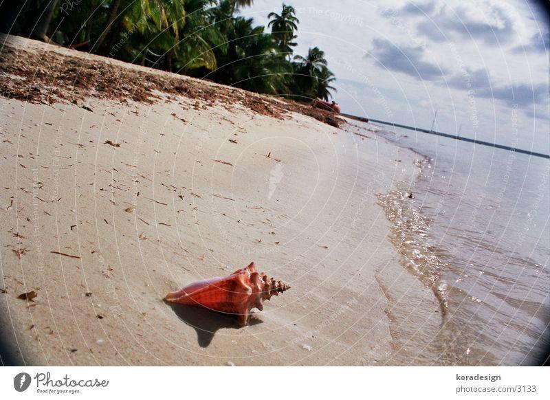 Mussel from the palmilla beach Beach Water Sand Cuba