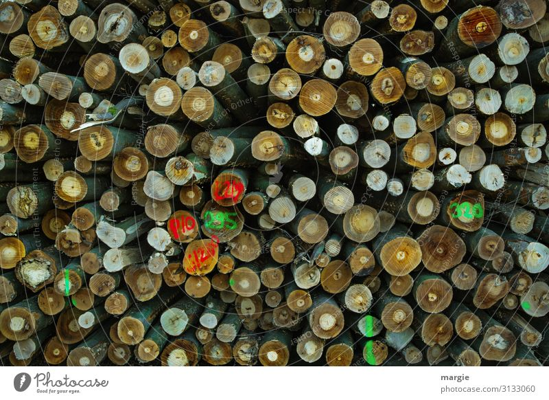 Many logs stacked with markings Energy crisis Environment Nature Tree Forest Save Multicoloured Green Transience Growth Change Future Tree trunk