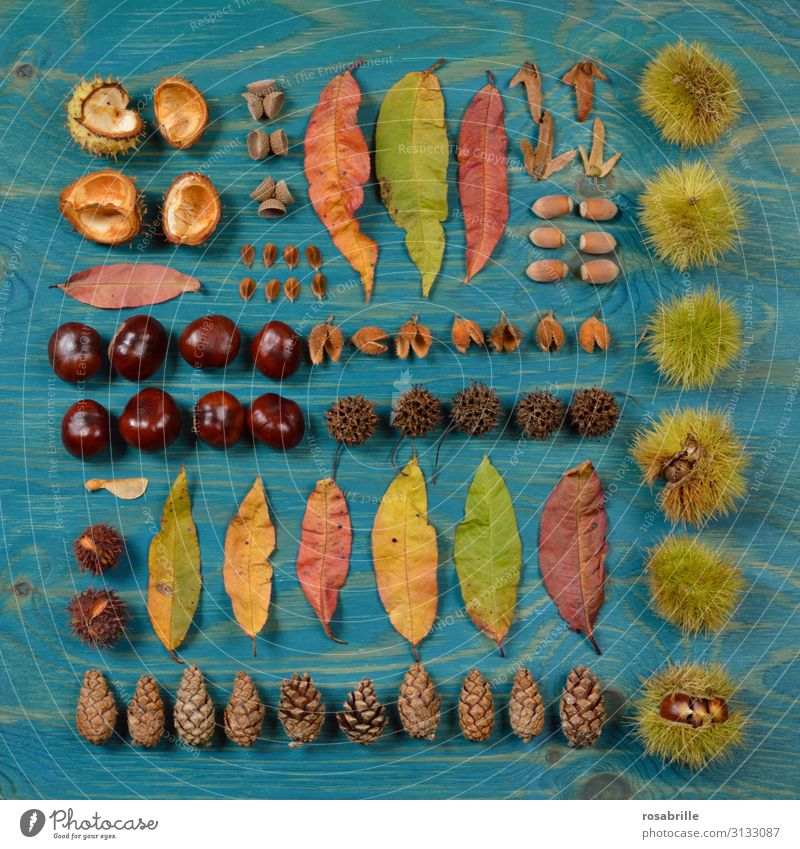 in a neat row without pricking your fingertips. Fruit Bowl Nature Autumn Leaf Collection Wood Together Thorny Yellow Green Orange Red Turquoise Arrangement