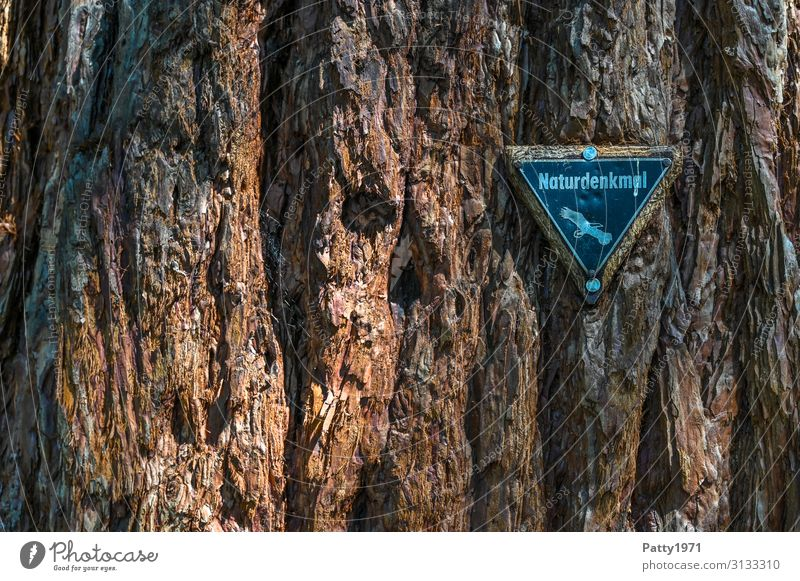 Natural monument plaque on a sequoia tree Tree Exotic Redwood Sequoiadendron giganteum Tree bark Structures and shapes Signs and labeling natural monument Old
