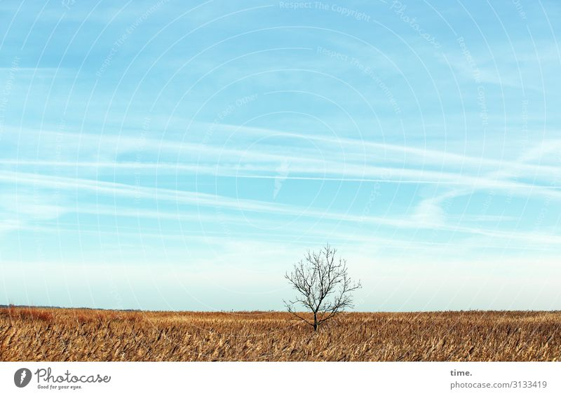 Heimatfilm (IV) Agriculture Forestry Environment Nature Landscape Sky Clouds Horizon Beautiful weather Plant Tree Agricultural crop Field Bright Patient Calm