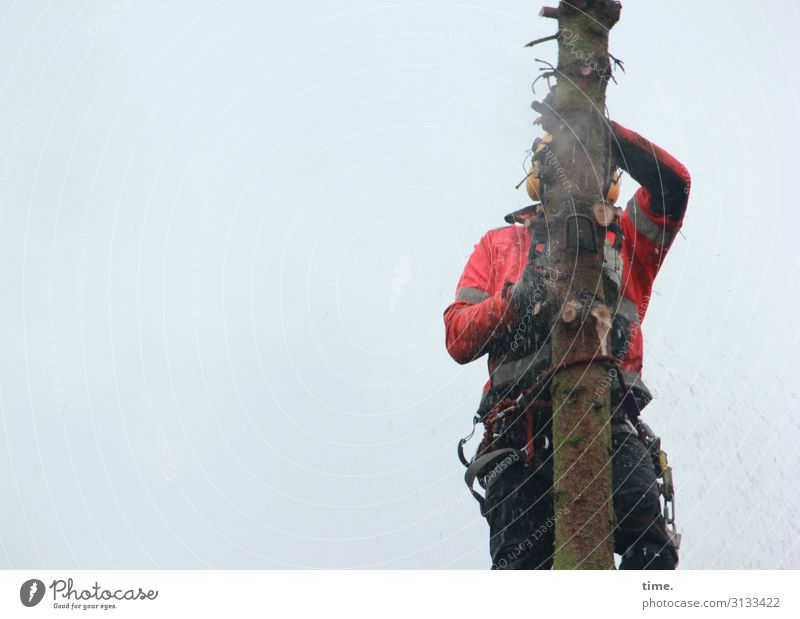 Human being Man Tree Adults Work and employment Masculine Change Rope To hold on Agriculture Tree trunk Profession Risk Concentrate Services Make