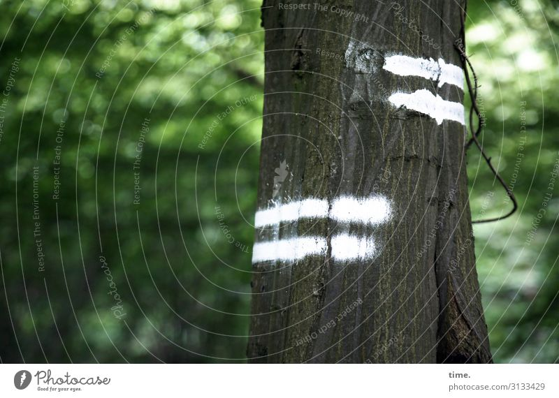 Tree & Message Forest Spring Green mark Sign Stripe leaves daylight Puzzle mystery Code Hiking hiking trail White foliage opaque In transit Tree trunk
