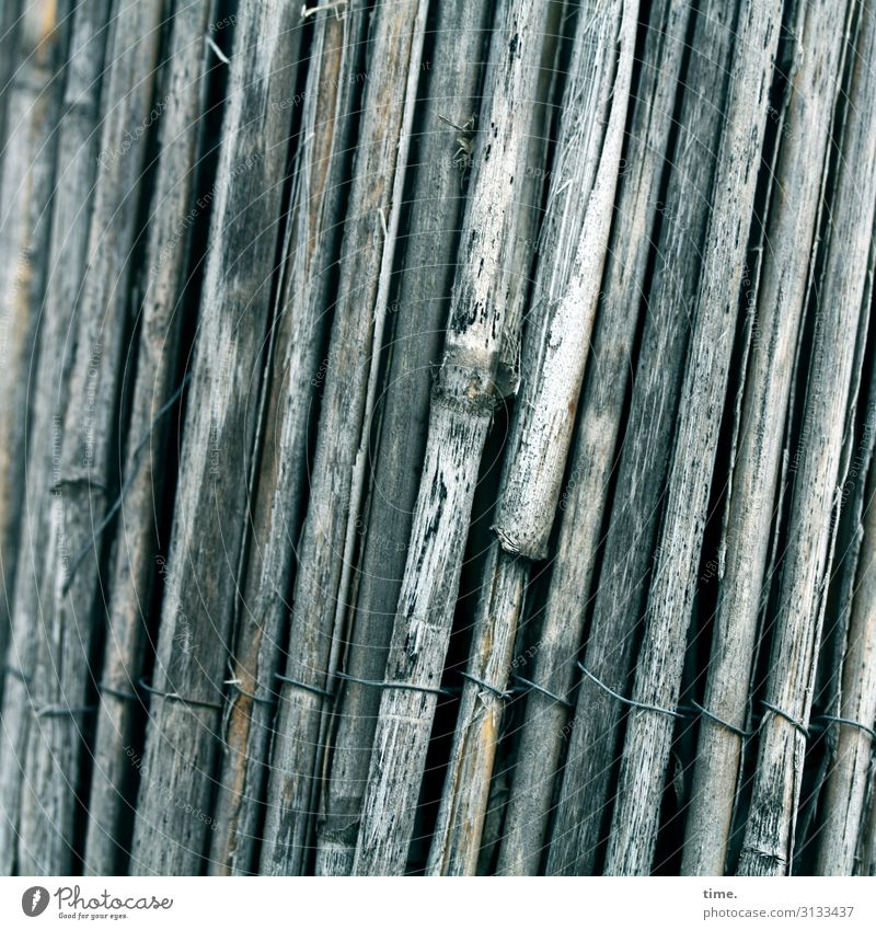 Stories of the fence (XXVI) Wire Common Reed Metal Line Network Old Dark Trashy Safety Protection Together Fatigue Pain Apocalyptic sentiment Inspiration