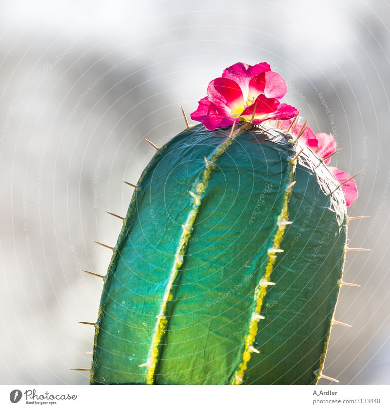 Cactus with blossom, feel for it. Exotic Joy Feasts & Celebrations Carnival Fairs & Carnivals Art Work of art Event Party Plant Hat Exceptional Thorny Yellow