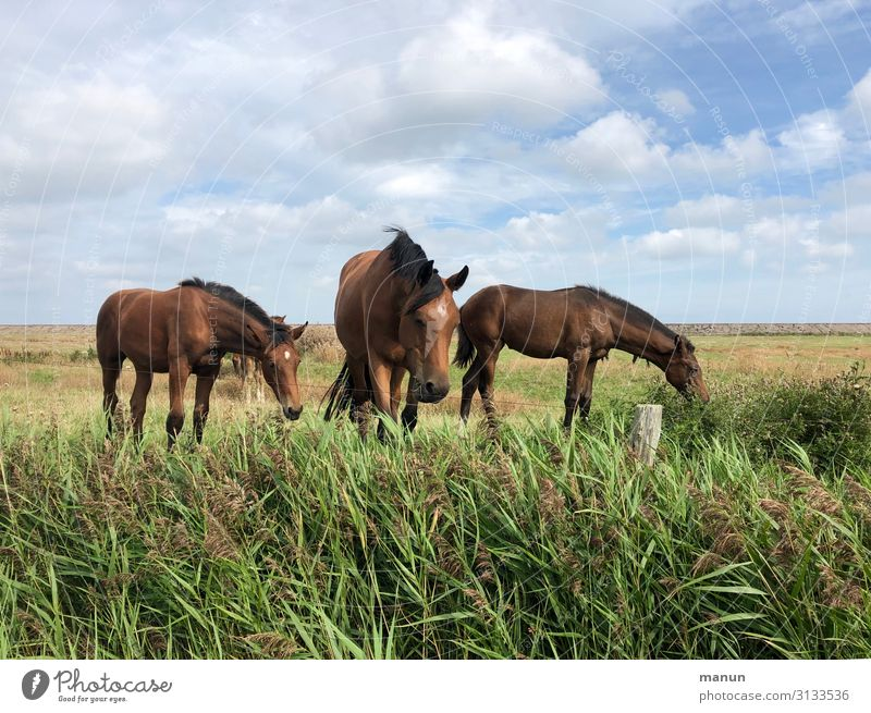 Easy, brown! Leisure and hobbies Vacation & Travel Equestrian sports Beautiful weather North Sea Pasture Horse Group of animals To feed Looking Happiness Fresh