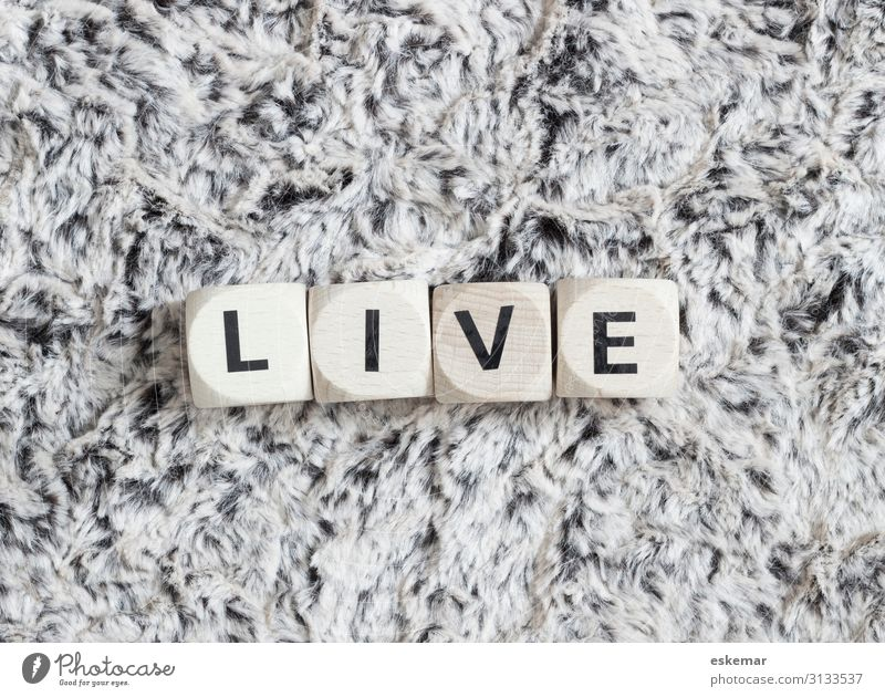 live Pelt Characters Authentic Black White Live Word Letters (alphabet) Text writing lettering Language Black & white photo Subdued colour Interior shot